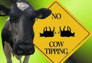 COW TIPPING2